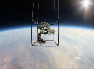 Rusi će gajiti biljke u svemiru