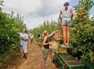 U Srbiji više od pola miliona sezonskih radnika radi na crno