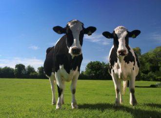 Farmland prodat Kinezima za 24 miliona eura