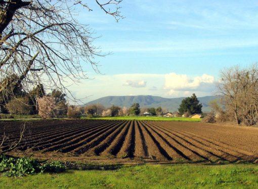 Poljoprivreda Španiji godišnje donosi 40 milijardi eura prihoda