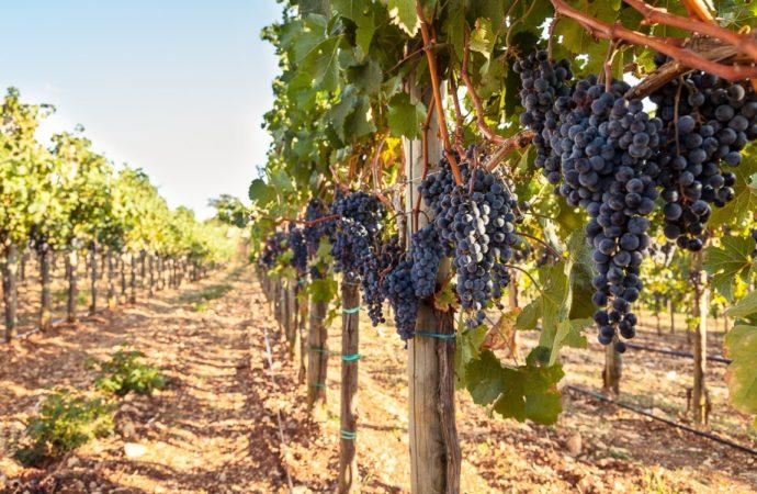Istra proglašena vinskom regijom godine u svijetu