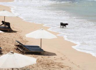 """Pakao na """"rajskom ostrvu"""": Užasna istina o Baliju"""