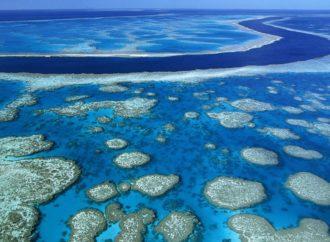 Najveći koralni greben vrijedi kao 12 Sidnejskih opera