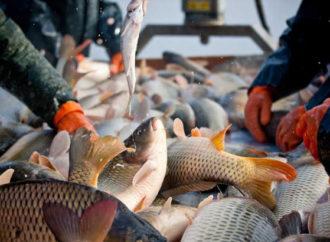 Ribari iz BiH i dalje plaćaju carine jer EU nije uskladila propise