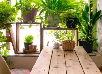 Pet kućnih biljaka koje odlično utiču na vaše zdravlje