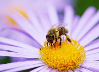 Pčele 'zarade' 22 milijarde evra godišnje