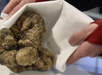 Tartuf težak 850 grama prodat za 85.000 evra